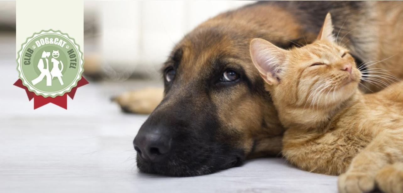 «Автомобильный Мегаполис НИКО» предлагает услугу «отель для животных»